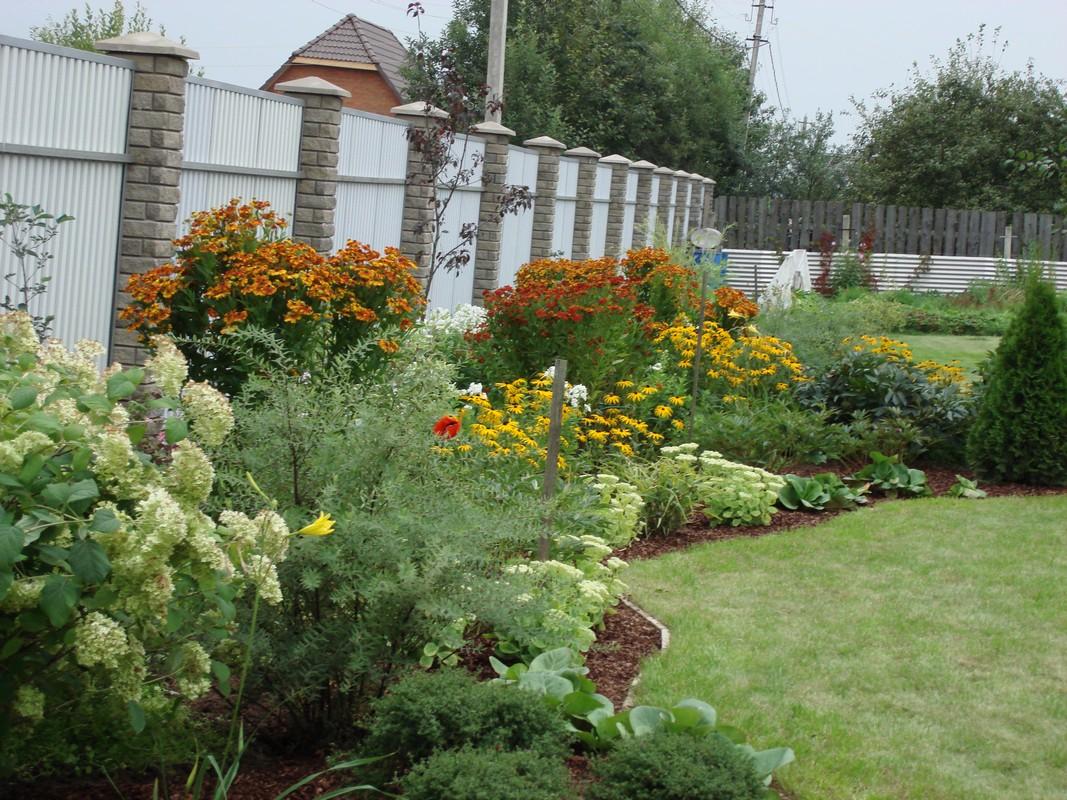 Декоративные кустарники для дачи, фото и названия какие выбрать